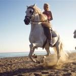 Horseriding perfect nanny